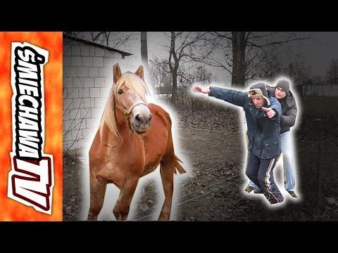 Patogen koński Barnauł