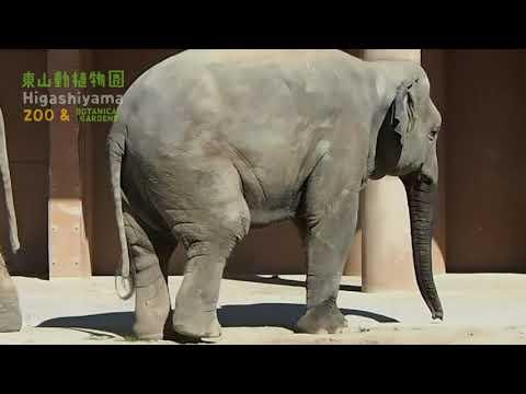 【東山動植物園公式】さくらバックオーライ