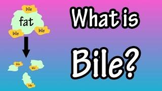 Bile - What Is Bile?