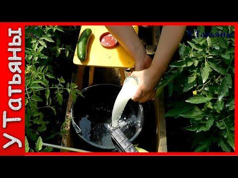 СЫВОРОТКА и ЙОД от фитофторы и мучнистой росы на: томатах и огурцах. Молочная сыворотка на огороде.