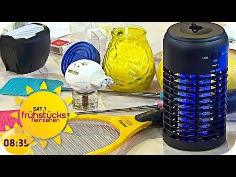 MITTEL gegen die MÜCKENPLAGE | SAT.1 Frühstücksfernsehen | TV