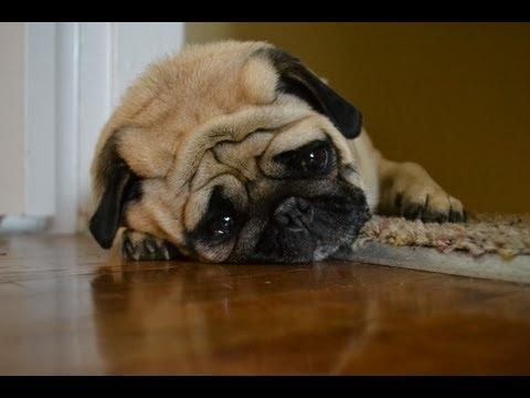 Sad Dog Diary by @zefrank1
