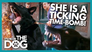 German Shepherd Taught To Bite Has Victoria Worried | Its Me Or The Dog