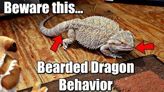 What Your Beardie is Trying to Tell You (pt.4)