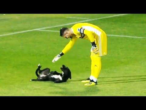 Los Momentos más Graciosos del Fútbol   Animales en el Fútbol