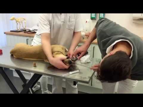 Wie Prostata-Adenokarzinom heilen