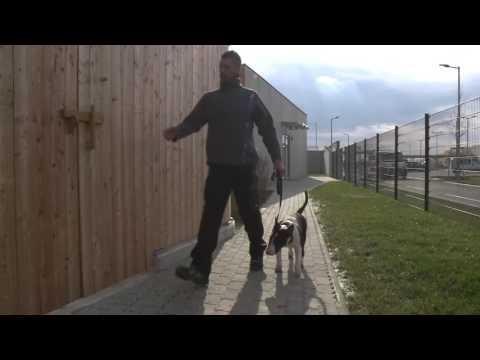 Single urlaub mit hund kroatien