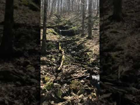 Video Of First Creek Dispersed Mammoth Cave, KY