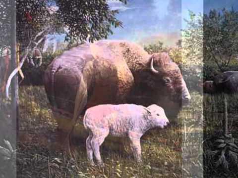 White Buffalo Calf Woman Sings Rainbows Come Home Thunder Make a Stand