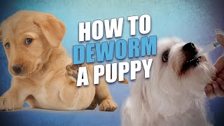 How to Deworm a Puppy Yourself At Home (and what you must know beforehand)