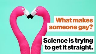 What makes someone gay? Science is trying to get it straight. | Alice Dreger | Big Think
