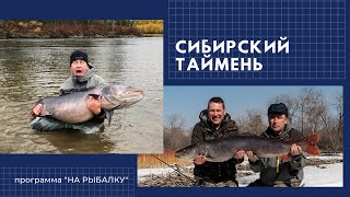 Сибирский таймень