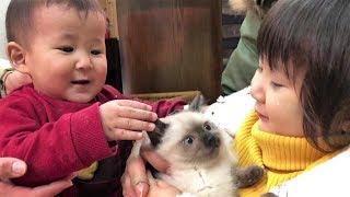 【赤ちゃん&2歳児】子猫と再会 【猫ちゃんと赤ちゃん&お姉ちゃんはお友達】