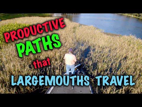 Productive Paths