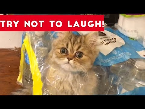 Super FUNNY DOG AND CAT ANIMAL VIDEOS – Watch and DIE FROM LAUGHING