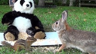 Chipmunk Grabs a Bunny Rabbit by the Throat : ( Poor Bunny!