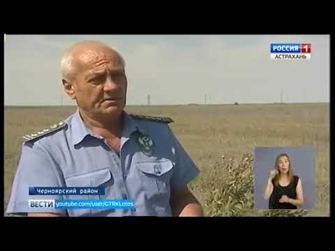 Управлением Россельхознадзора выявлен очаг произрастания горчака ползучего в Астраханской области