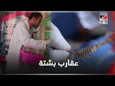 تربية العقارب.. بشتة شاب مصري يسعى لإنهاء معاناة العالم من السرطان
