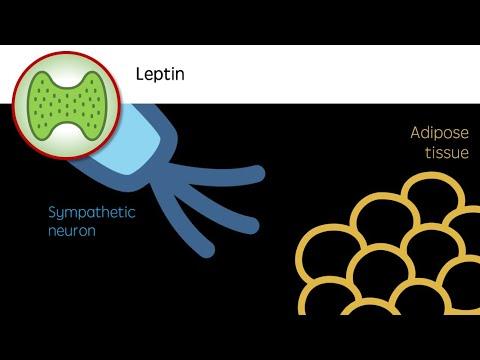 Supraponderali insarcinata poate pierde in greutate