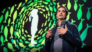 Gambar cover Four billion years of evolution in six minutes | Prosanta Chakrabarty