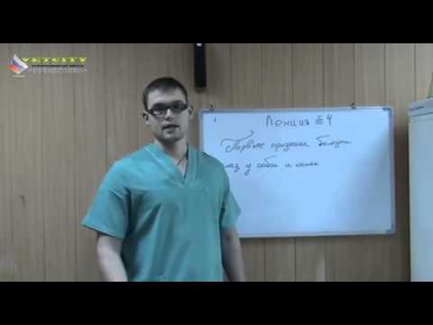 Лечение от паразитов и токсинов