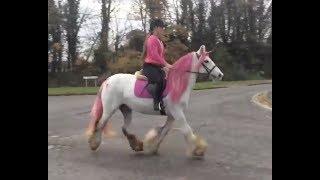 Лошадь или единорог? Horse or Unicorn?