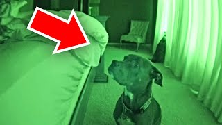 Dad Sets Up Hidden Camera To Find Out Why Dog Stares At Him All Night