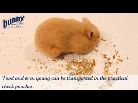 Bunny Sonho para Hamster Basic 400g