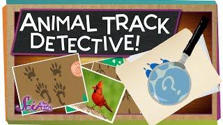 Animal Track Detective!