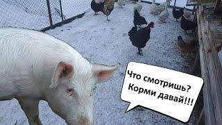 Домашнее хозяйство в деревне. Кормление и уход. Куры,утки,кролики и поросенок!!!)