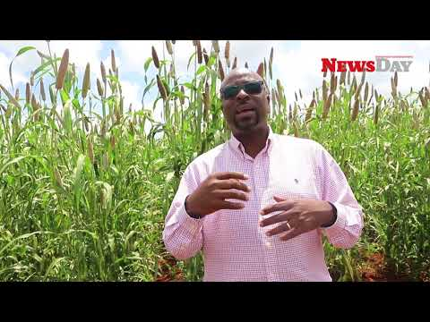 African Agricultural Technology Foundation (AATF) interview