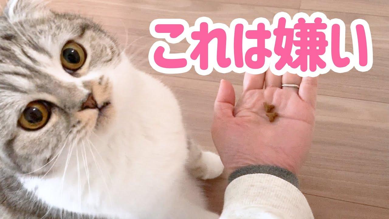 ダイエットごはんはキライ!お手で催促する猫[スコティッシュフォールド・ぐう]
