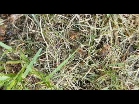 , title : 'Practical Beekeeping - Chronic Bee Paralysis Virus
