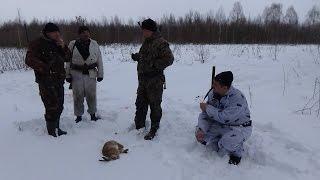 Охота на зайца с Англо-русской гончей 21.01.2017 / Hunting the Hare!!!