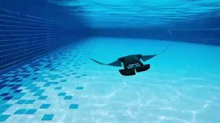 Newswise:Video Embedded nus-developed-manta-ray-robot-swims-faster-and-operates-up-to-10-hours