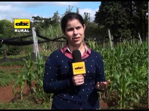 Control natural de gusanos en maíz