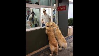 「絶対笑う」最高におもしろ犬,猫,動物のハプニング, 失敗画像集# 14