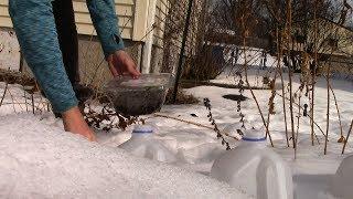 winter sowing using milk jugs (zone 4a) | gardening 2018-03-15