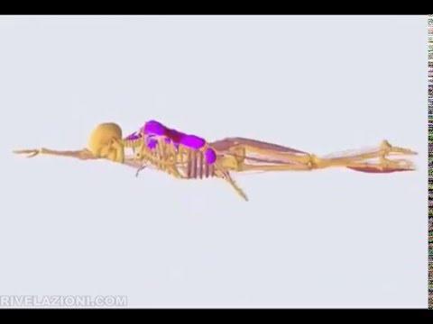 Esercizi per un dorso da una curvatura di spina dorsale