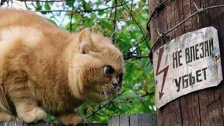 Коты разбойники 10 эп.  Кот неудачник! Новые приколы ноябрь 2016