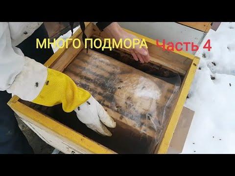 Осмотр слабые и активные пчело семьи перед похолоданием.