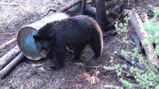 KPL Outfitting Trophy Black Bear Hunts Alberta Canada