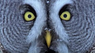 Mesmerising Owl Moments | BBC Earth