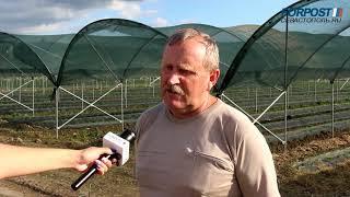 АО «Артвин» установило тепличный комплекс для выращивания земляники садовой