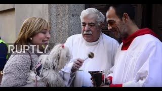 Spain: Animals blessed on patron saint of pets celebration day