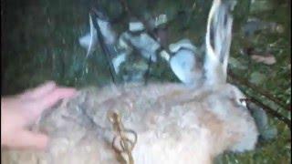 Как поймать зайца на даче