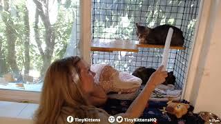 Hyatt the blind feral cat finally gets a diagnosis!  TinyKittens.com