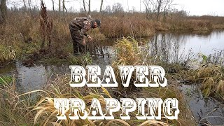 Successful Beaver Trapping with conibear traps. Beaver Hunting