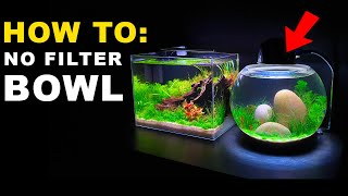 HOW TO: NO FILTER BOWL AQUARIUM SETUP || MD FISH TANKS