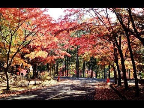三倉岳の紅葉